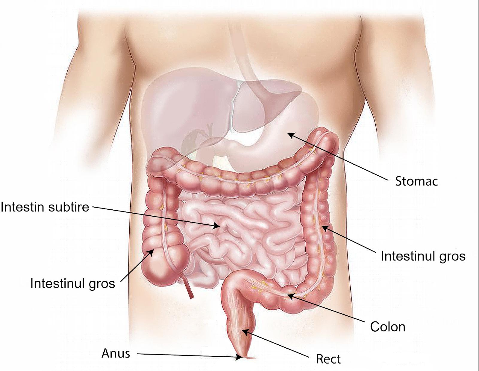Boli metabolice - ce sunt, exemple, cauzele aparitiei si tratamente recomandate